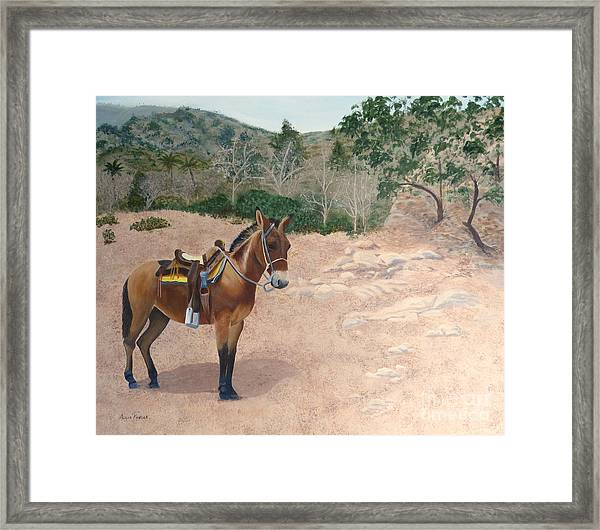 Zachary The Mule Framed Print