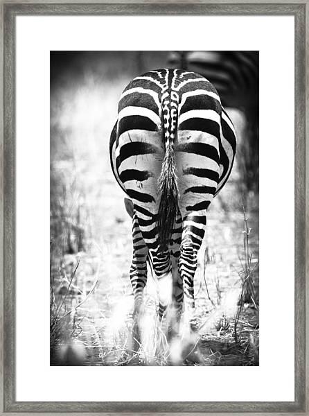 Zebra Butt Framed Print