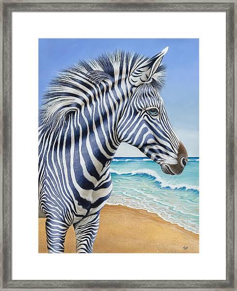 Zebra By The Sea Framed Print