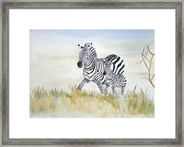 Zebra Family Framed Print