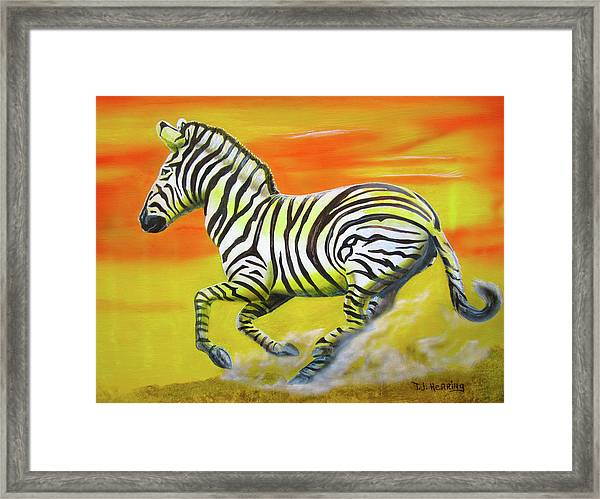 Zebra Kicking Up Dust Framed Print