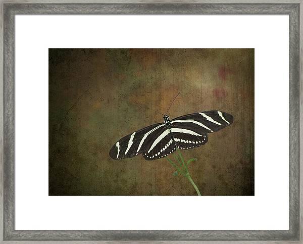 Zebra Longwing  Butterfly-1 Framed Print