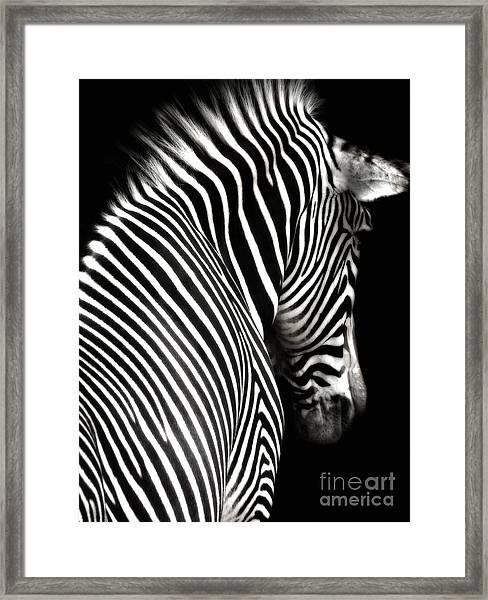 Zebra On Black Framed Print