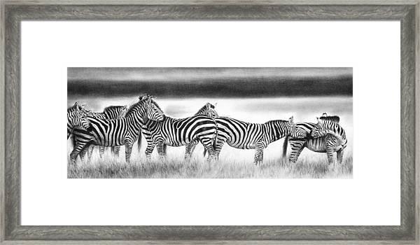 Zebra Panarama Framed Print