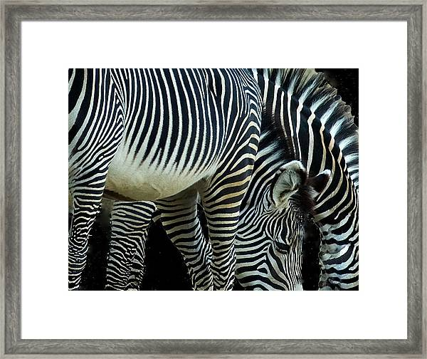 Framed Print featuring the photograph Zebras by Mae Wertz