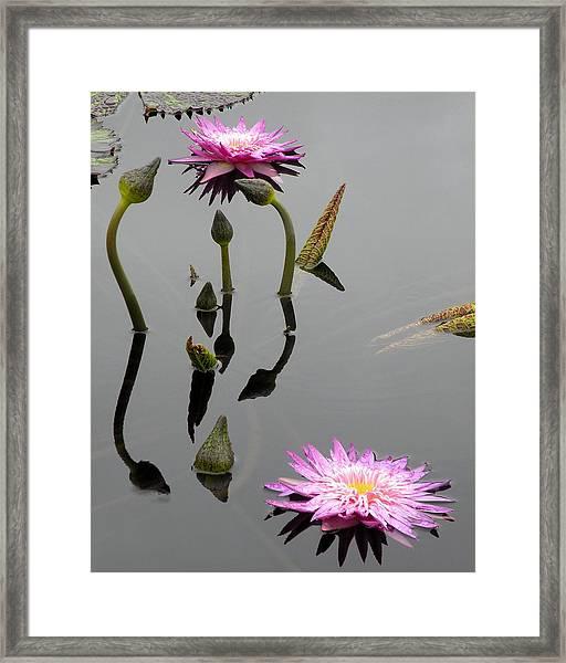 Zen Lilies Framed Print