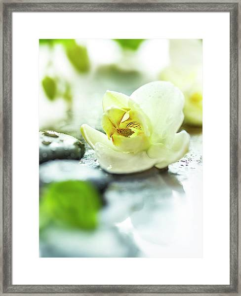 Zen Orchid Framed Print by #name?