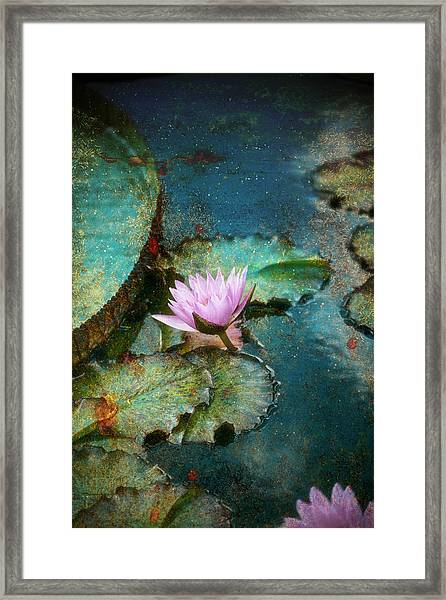 Zen Water Lily Framed Print