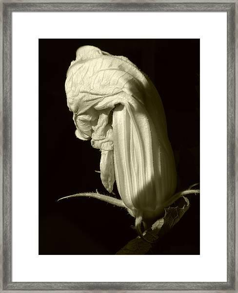 Zucchini Flower Framed Print