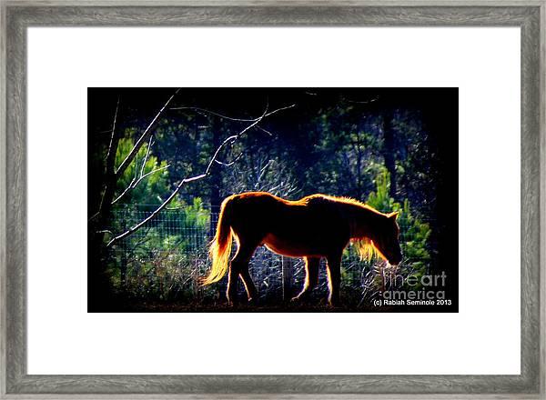 Zuni In The Sunlight Framed Print