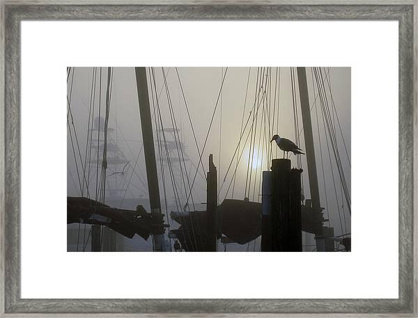 Early Morning At The Boat Docks Framed Print