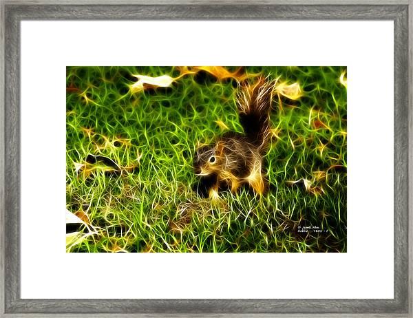 - Fractal - Pointer - Robbie The Squirrel Framed Print
