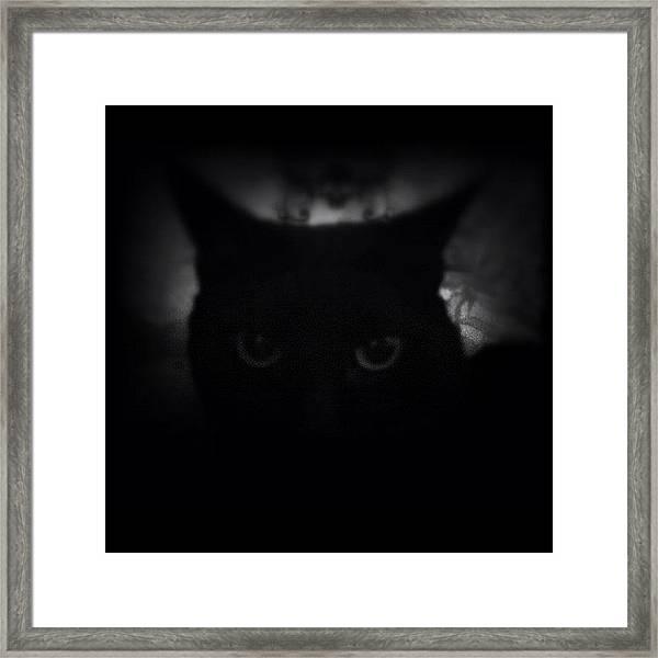 ♞ #ig_m    Luna     Framed Print by M M