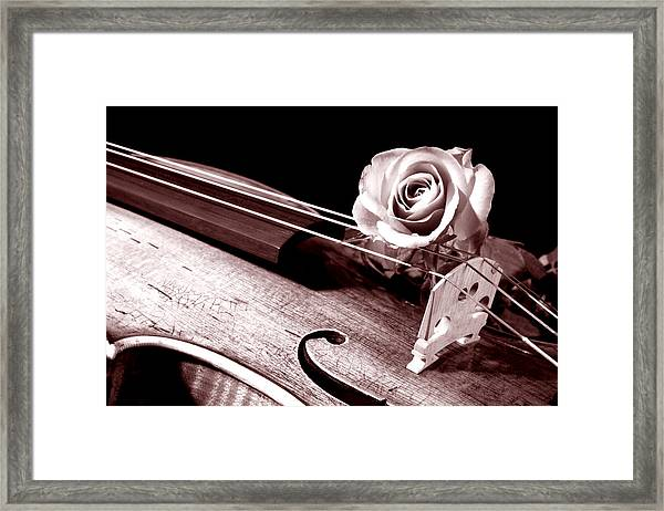 Rose Violin Viola Framed Print