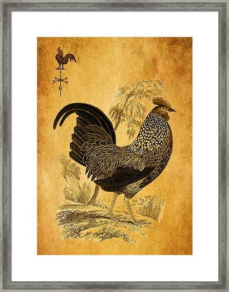 Thanksgiving Rooster Framed Print
