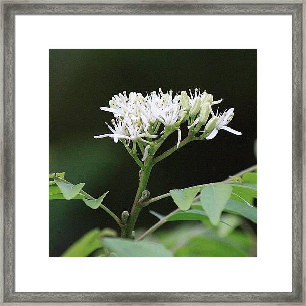 أزهار شجرة الكاري، Framed Print
