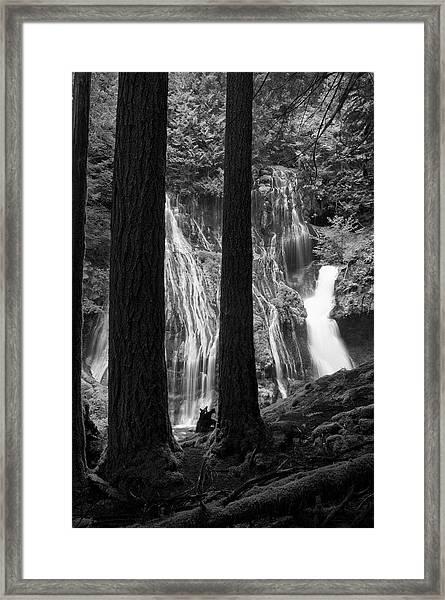 A Panther Lurks Framed Print