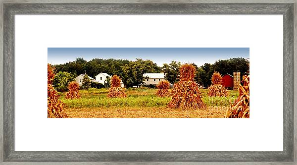 Amish Corn Harvest Framed Print by Russell Ford