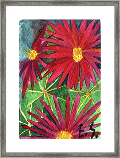Arizona Pincushion Framed Print