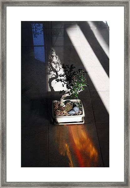 Bending Nature Framed Print