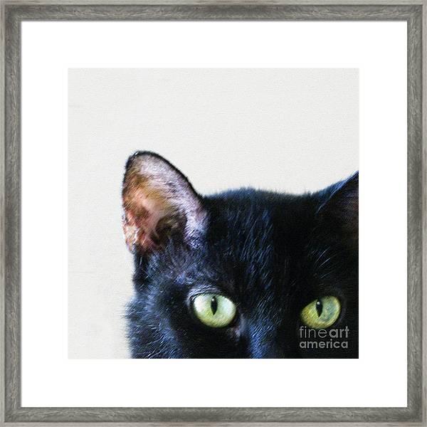 Black Cat Green Eyes Framed Print