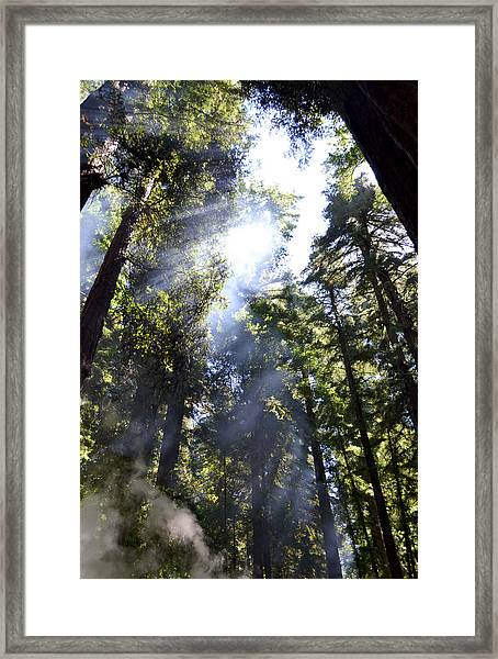Breaking Through The Trees II Framed Print