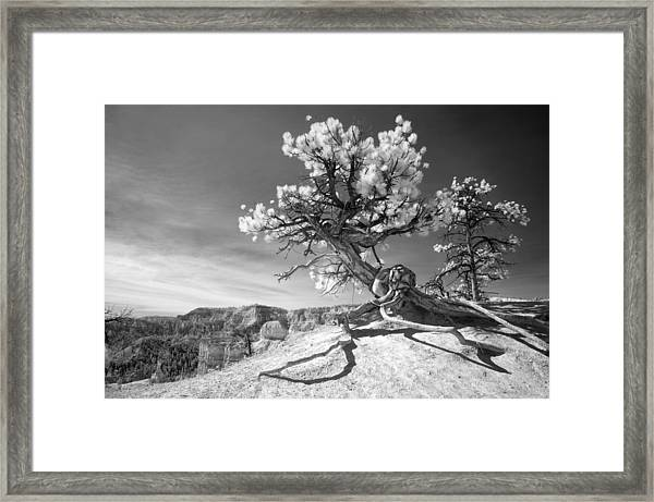 Bryce Canyon Tree Sculpture Framed Print
