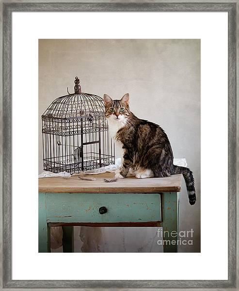 Cat And Bird Framed Print