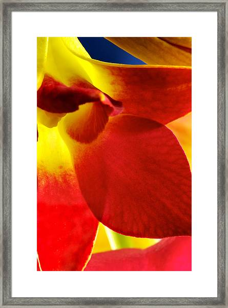 Dendribium Malone Or Hope Orchid Flower Framed Print