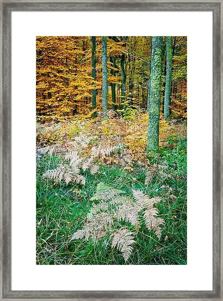 Fall Scenery Framed Print by Maciej Markiewicz