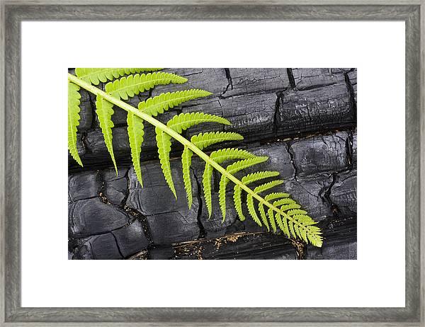 Fern On Burnt Log Framed Print
