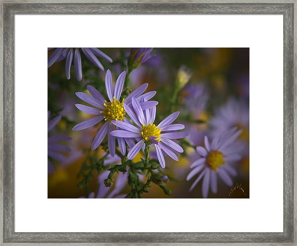 Flowers On Blue Ridge Parkway Framed Print by Williams-Cairns Photography LLC