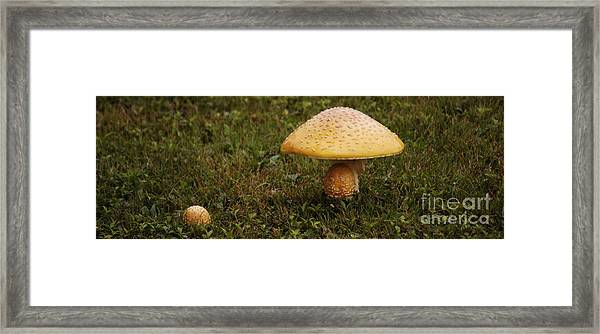Fly Amanita Framed Print