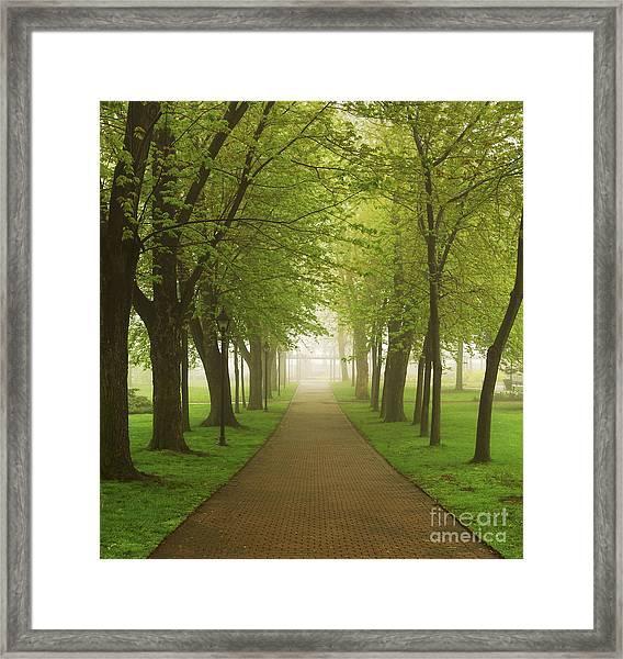 Foggy Park Framed Print