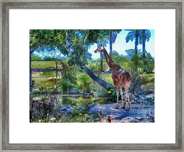 George The Giraffe Framed Print
