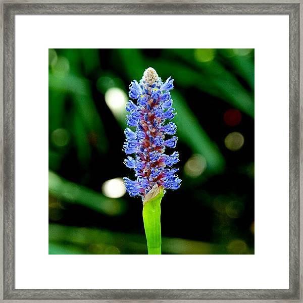 Glowing Pond Beauty Framed Print