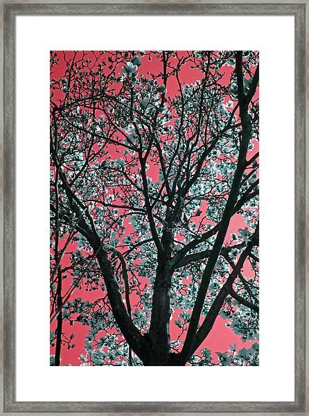 Kimono Pink Framed Print