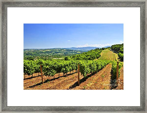 Landscape With Vineyard Framed Print