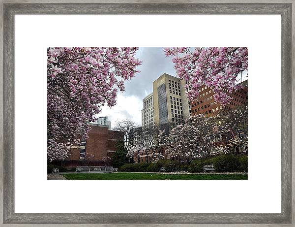 Magnolia Garden Framed Print by Andrew Dinh