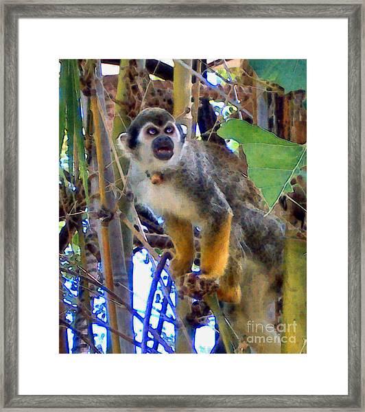 Monkeyshines Framed Print