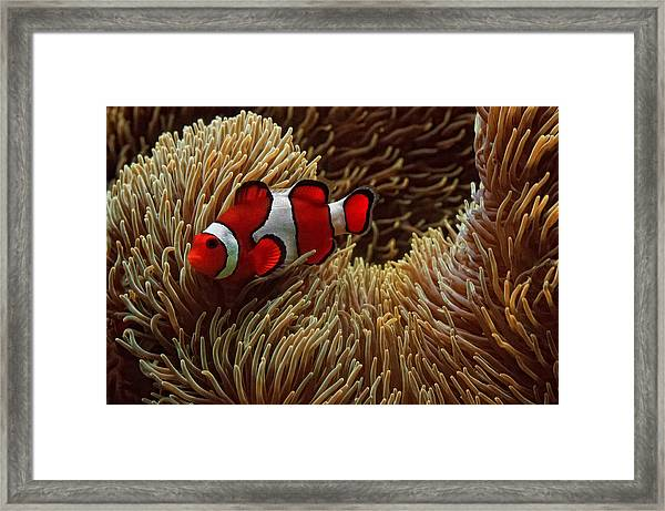 Nestled  Framed Print by Donna Pagakis