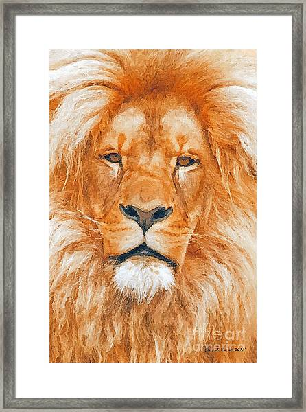 Old Lion Framed Print