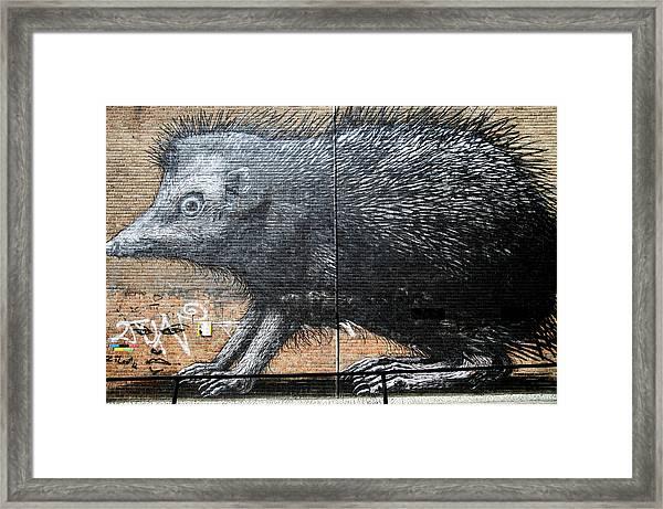 Prickly Days Framed Print by Jez C Self