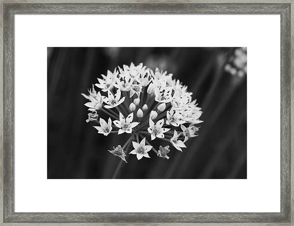 Pure Of Heart Framed Print