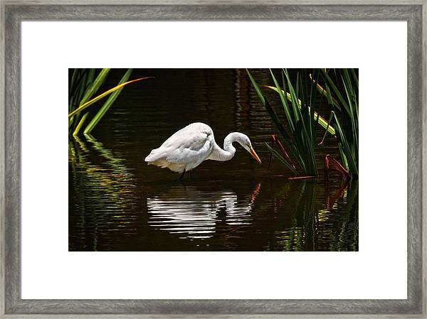 Ripples On The Pond  Framed Print by Donna Pagakis
