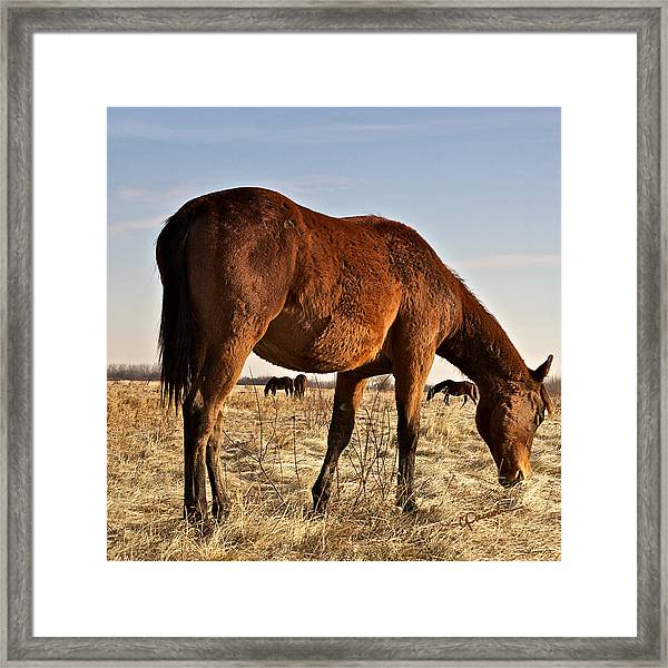 Stand Tall Framed Print