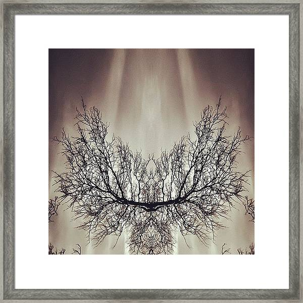 #symmetry #symmetrical #mirror Framed Print
