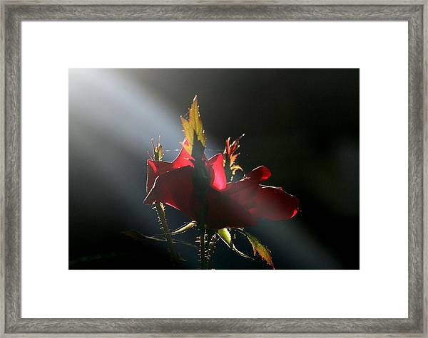 The Queen Framed Print by Valia Bradshaw