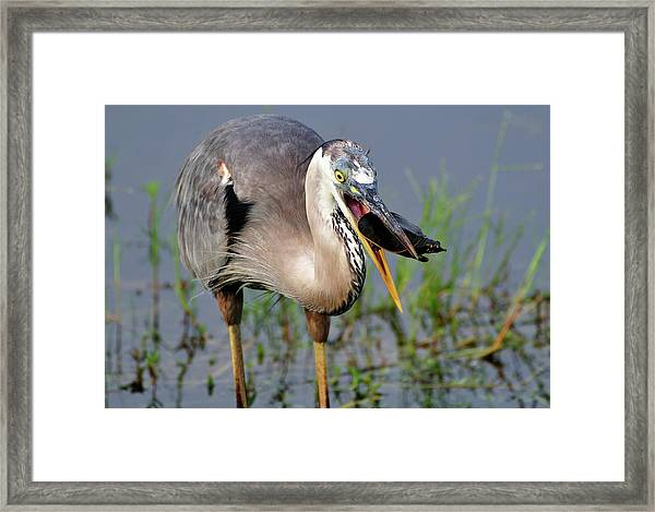 Toss And Catch Framed Print