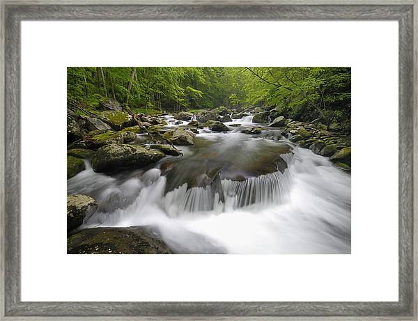 Tremont Spring In Great Smoky Mountains Framed Print by Darrell Young
